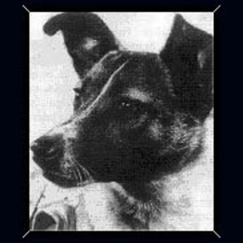 First Dog Enters Space - Sputnik 2