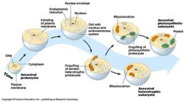 Teoría de la emdosimbiosis