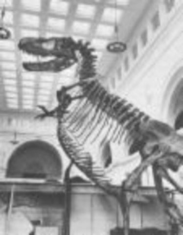 Cretaceous 136-65 MYA