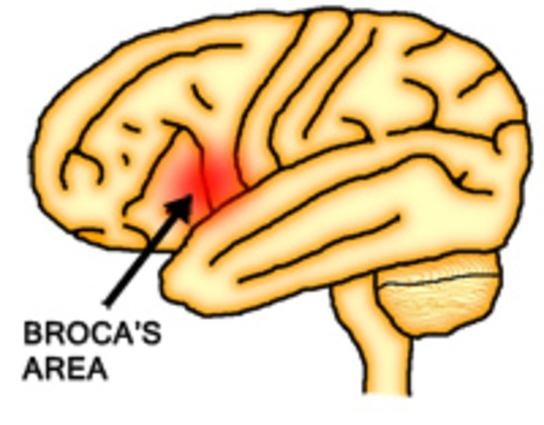 Paul Broca is credited with Brocas Area