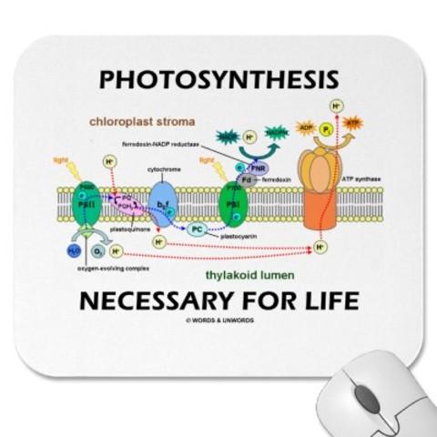 (3BYA) Photosynthetic Life