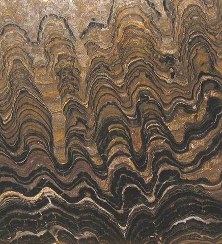 (3.5 BYA)  Stromatolite Fossils Formed