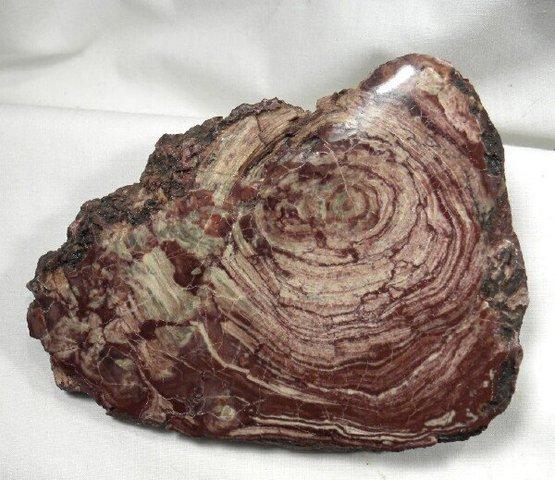 (3.5BYA) Stromatolites