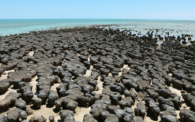 (3.5 BYA) Stromatolites emerge