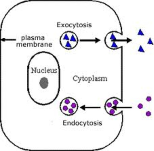 (3.5 BYA) Forming of Cells