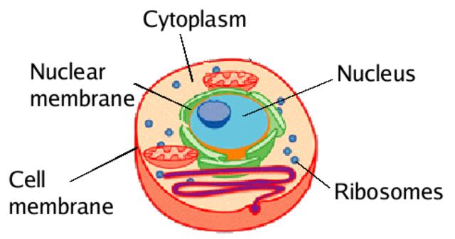 (1900-present) RNA