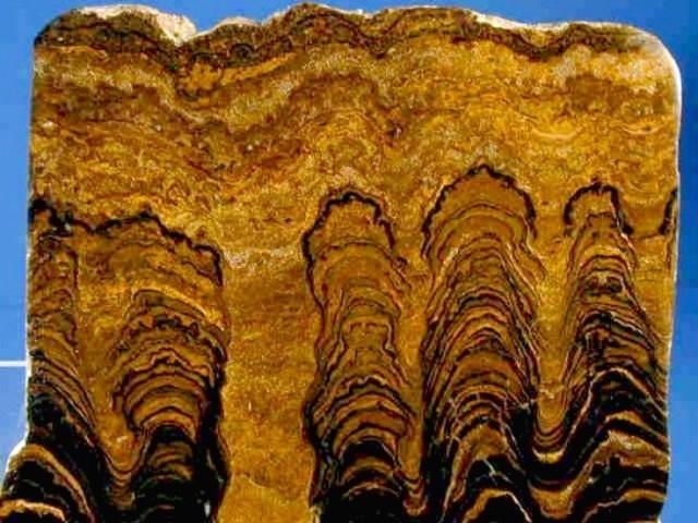 Stromatolite Fossils (3.5 BYA)