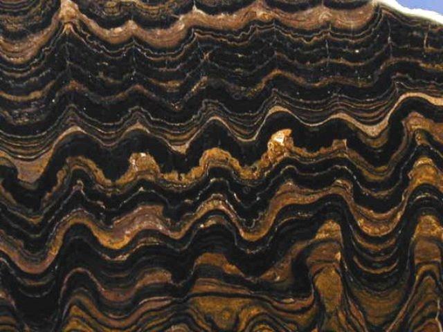 (3.5 BYA) Stromatolites