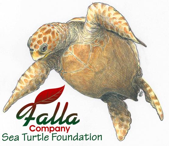 Falla Company Sea Turtle Foundation