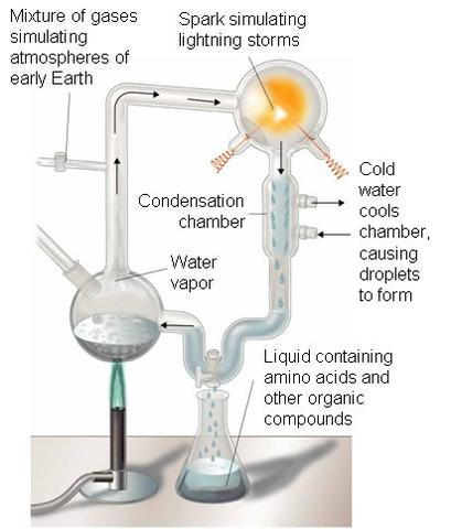 (1900-The Present) Harold C. Urey and Stanley L. Miller's Experiment