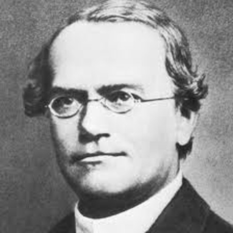 Gregor Mendel's Theory