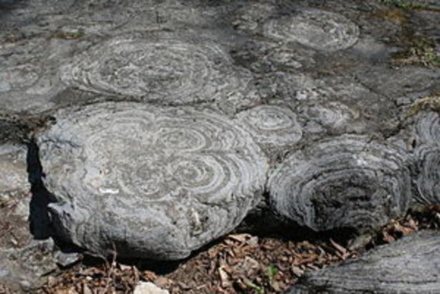 (3.5 BYA) Stromatolites formed