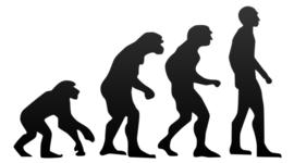 Theory of Evolution  timeline