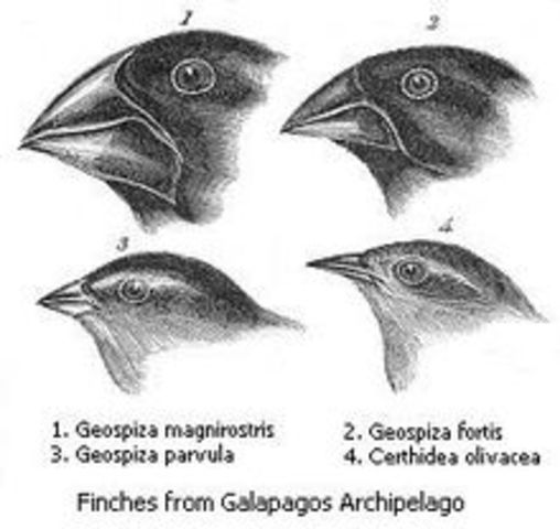 """<a href=""""http://darwin-online.org.uk/%20"""" rel=""""nofollow"""">Charles Darwin's Theory of Natural Selection</a>"""