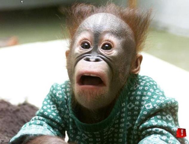 Harry Harlow demonstrates maternal importance in rhesus monkeys
