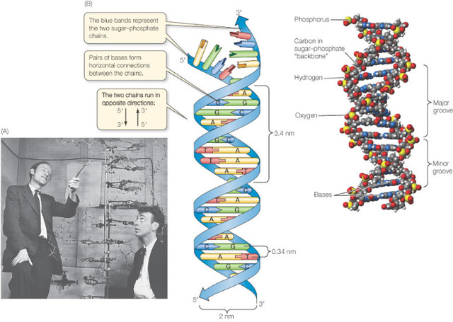Watson and Crick experiment meaning
