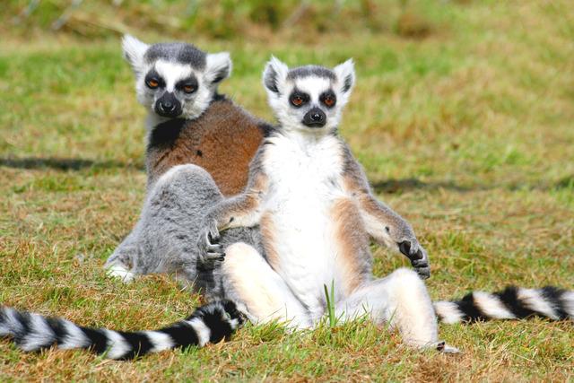 """Astro Lemurs <a href=""""http://www.bible.ca/pre-date-setters.htm"""" rel=""""nofollow"""">CoB</a>"""