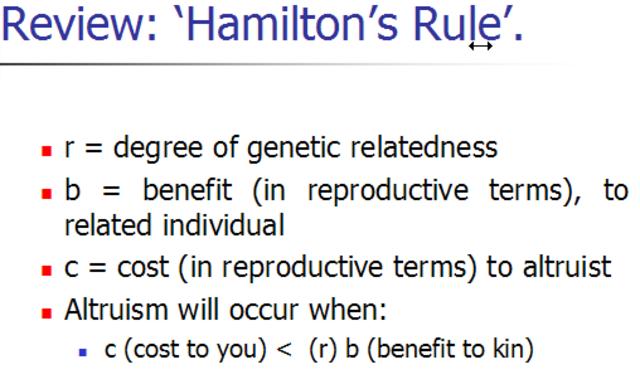 "William Hamilton Publishes ""Hamilton's Rule"""
