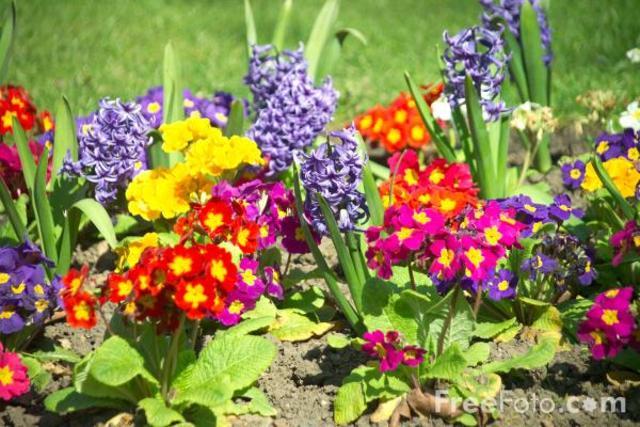 Take Up Gardening (Psychosocial)