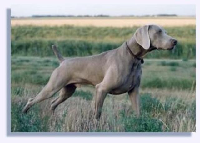 Get myself a hunting dog