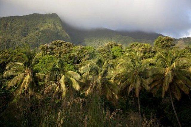Dominica becomes a British possession!
