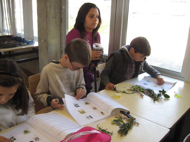 Realização de um herbário