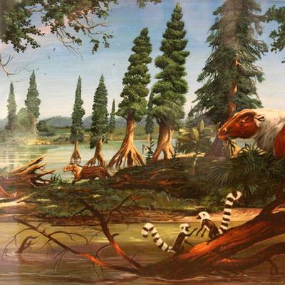 The Cenozoic Era timeline