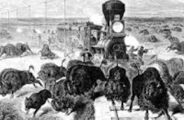 Early Buffalo