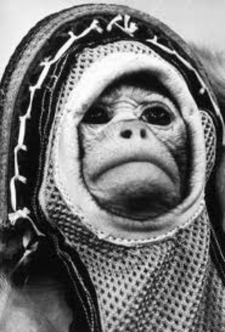 Ham the Space Monkey Sent Into Space