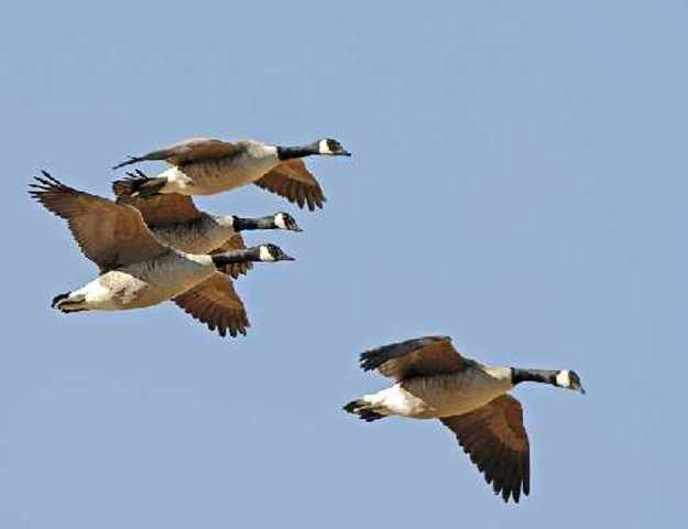 Migratory Bird Treaty Act of 1918
