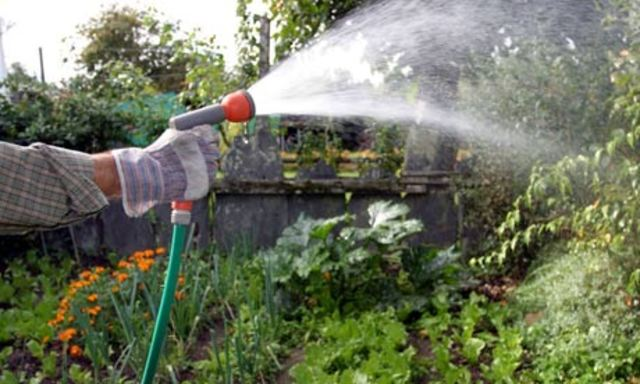 Daily Watering in Early AM to prevent fungi growth
