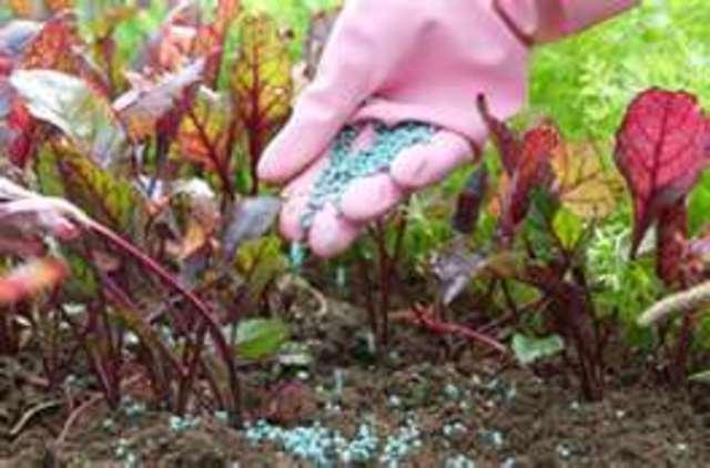 Fertilize the Garden