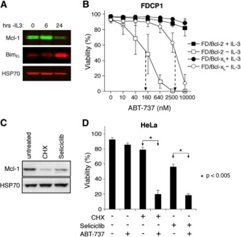 ABT-737 efficiently induces apoptosis if Mcl-1 is neutralized