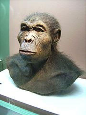 Los primeros Homo (2.6 millones a.c)