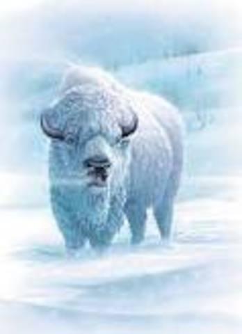 Buffalo saved