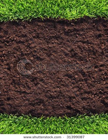 Good soil!