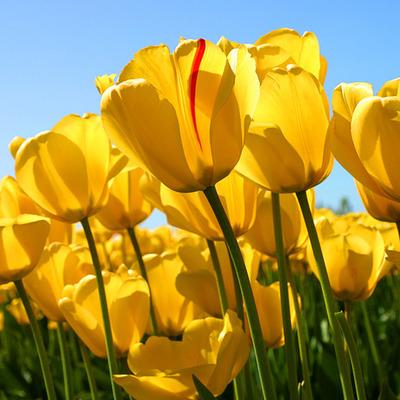 una flor de enamoramiento de papis timeline
