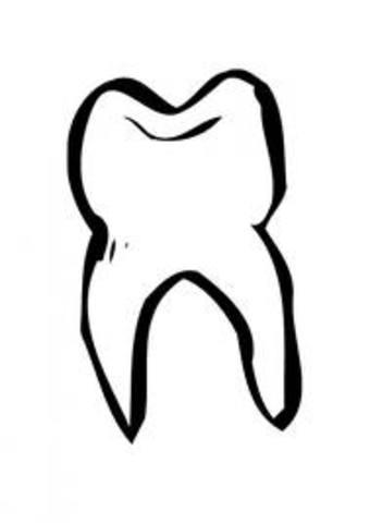 La caída del primer diente