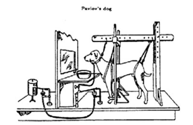 Pavlov y Watson -  introducen el conductismo en Psicología    que pone  la atención en la conducta observable