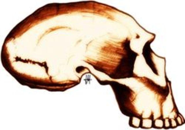 Homo georgicus (1.6 millones a.c)