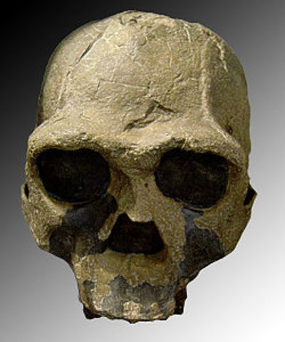 Homo ergaster (1.7 millones-1 millon a.C)