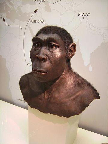 Homo erectus (1.8 millones-300000 a.C)