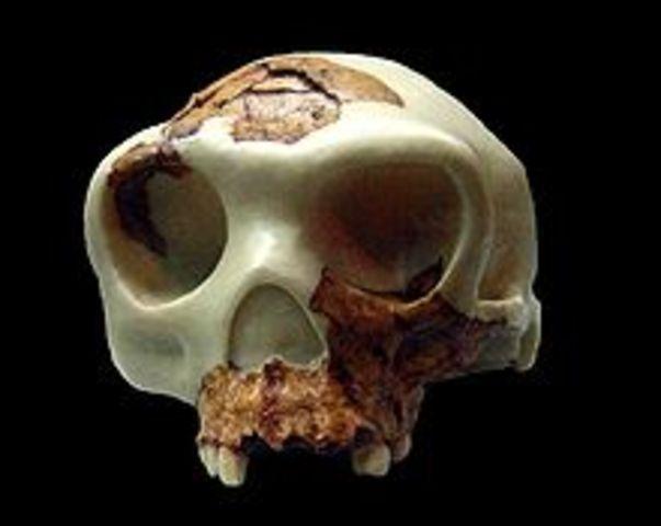 Homo antecessor (800000-600000 a.C)