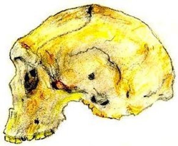 Homo rhodesiensis (600000-160000 a.C)
