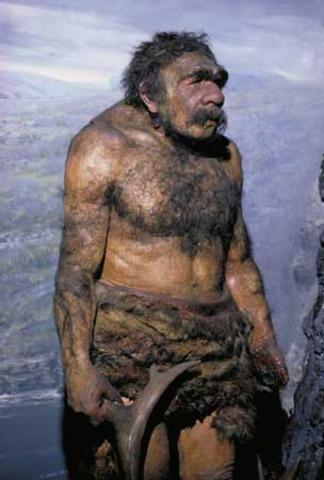 Homo neanderthalensis (230000-28000 a.C)