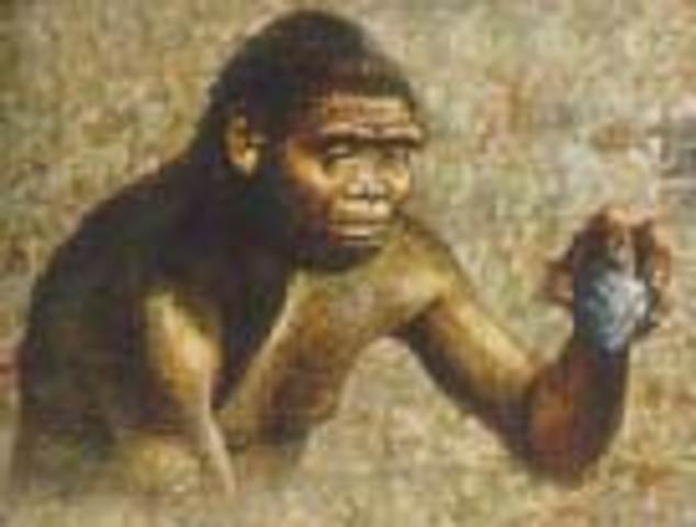 Hace 2.5 millones de años aparecio el Homo habilis