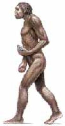 hace 1.5 millones de años aparecio el Homo erectus