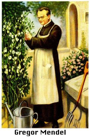 Mendel the beekeeper