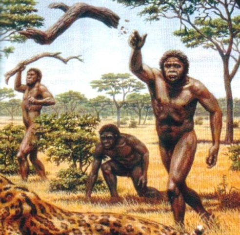 Caracteristicas del primate