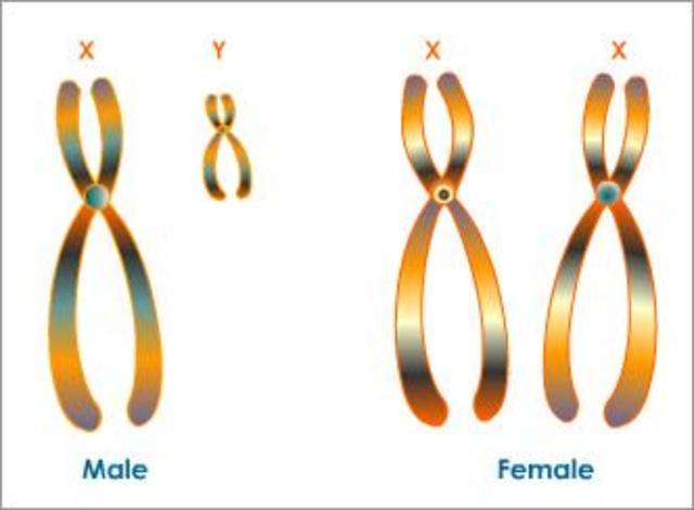 Specific Chromosomes Investigated